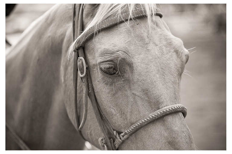 bw of hawaii rodeo horse